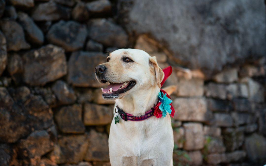 Doggo Daycare 1st Birthday Party
