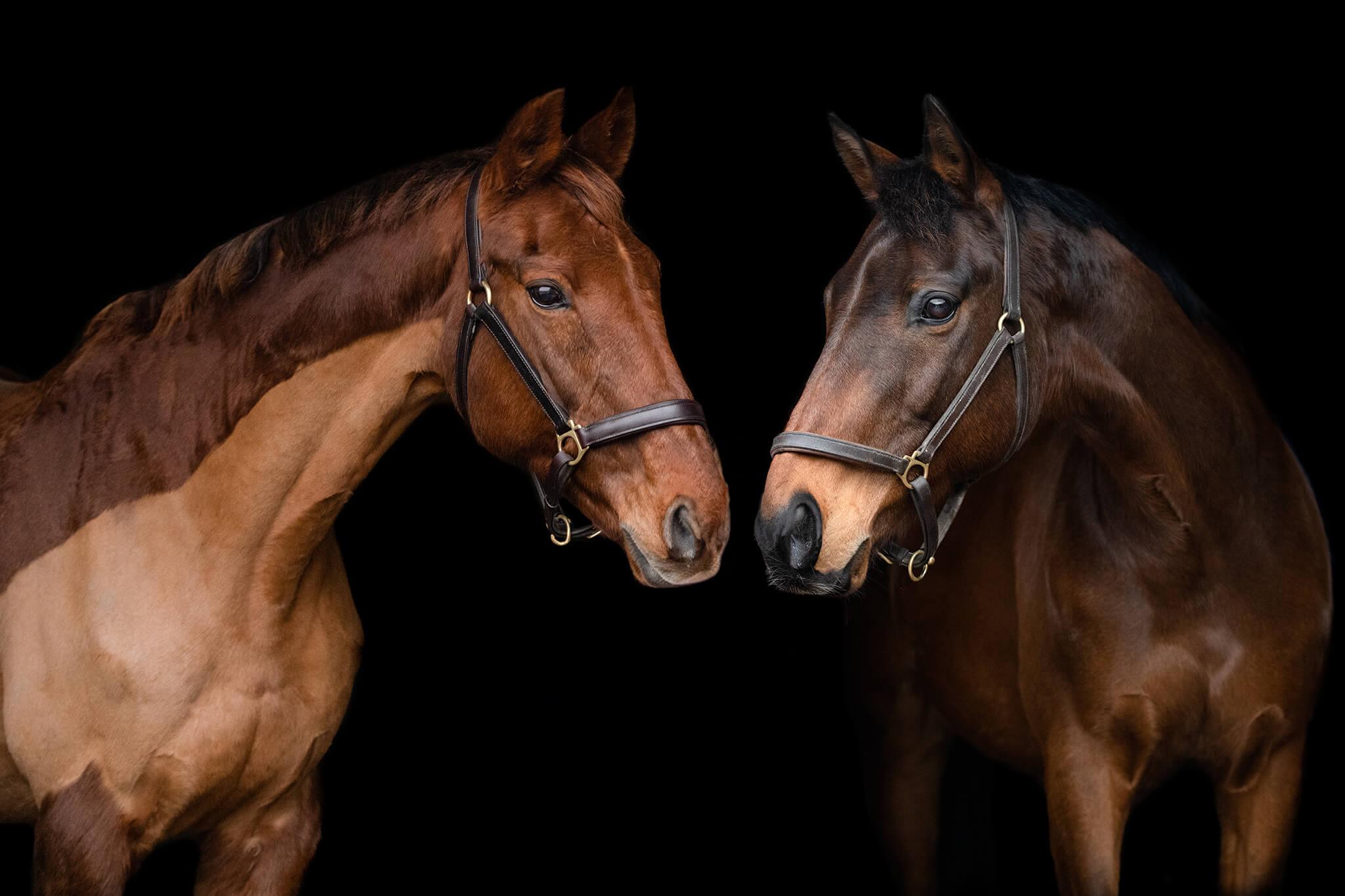 Equine-Photographer-New-Mills