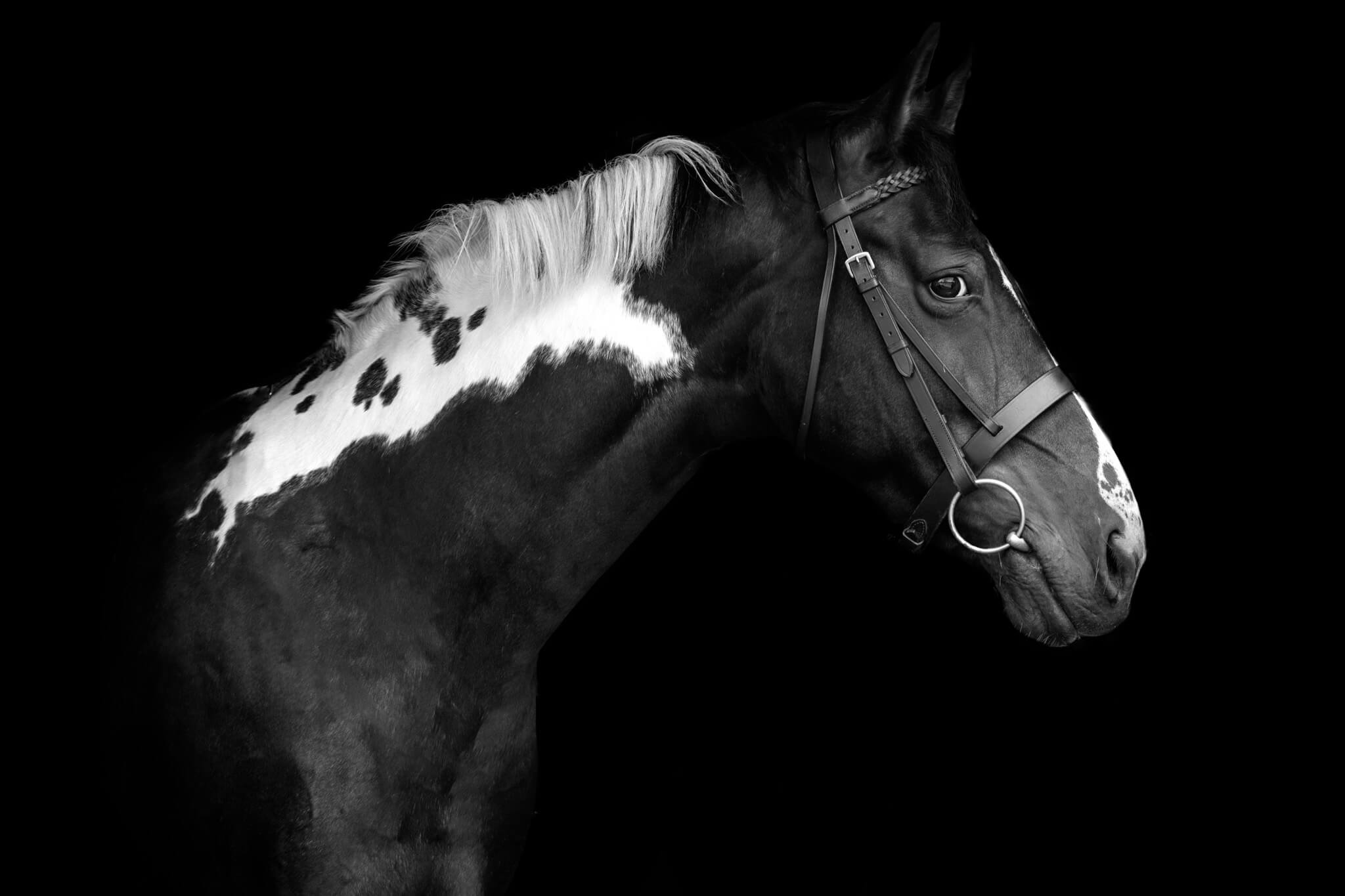 Black-and-White-Horse