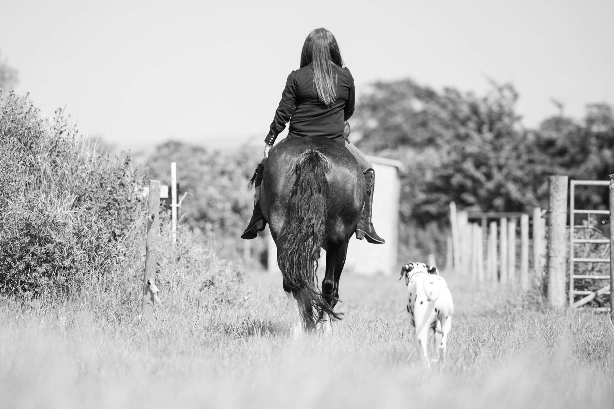 Horse-Dog-Photoshoot
